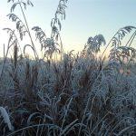 2 декабря. Зима робко постучалась…